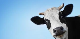 Mléko, kvóty, cena mléka